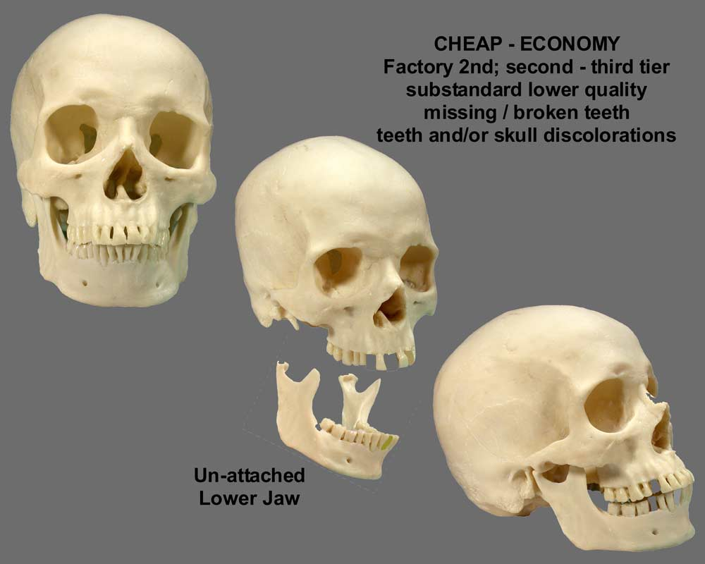 an analysis of skull and jaw Dna analyses performed on the bone, now held by the russian state  by  hitler's suicide shot, but what remained of his jaw coincided with his.