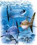 Apparel T-shirts Aquatic Printed:''Sharks with SUNGLASSES (Back)''