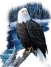 Apparel T-shirts Animals Wildlife Eagle Printed:''River WATCH''