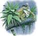 Apparel T-shirts Resort Printed:''Lguana w/ SUNGLASSES''