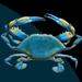 Apparel T-shirts 3DT HEAT TRANSFERs:'' Crab''