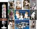 PET PHOTO CARDS & DISPLAY DEAL COMPLETE FREE FRT IN USA $144.00