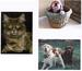 ANIMAL PET PHOTO CARDS DOGS CATS ASSORTMENT 12 DESIGNS $21.60